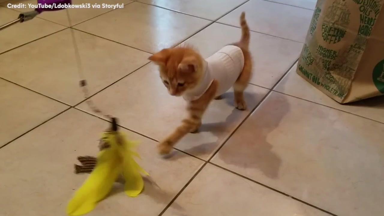 Kitten plays normally because of owners brilliant idea