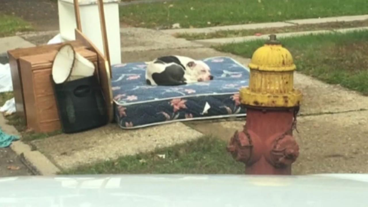 Dog waits months for evicted owners to return