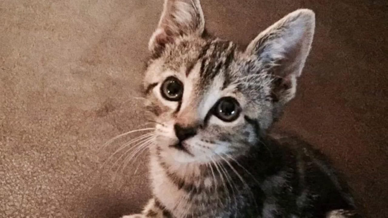 Cats make us healthier humans