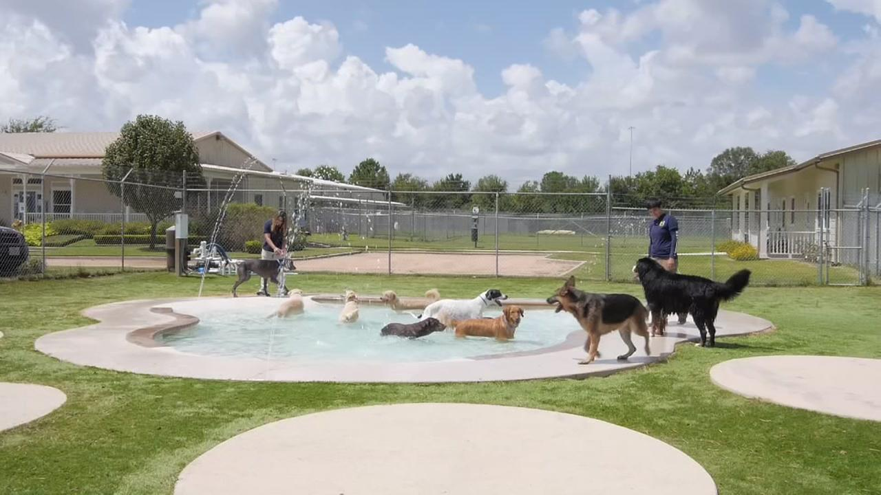 COOL SPACES: Meadowlake Pet Resort and Training Center