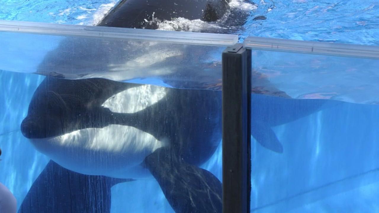 Famed Orca, Tilikum, dies