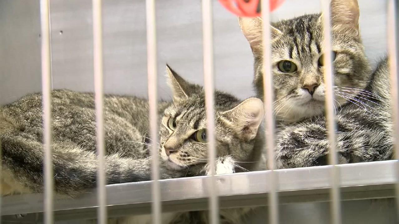 County rescues 57 cats from hoarder
