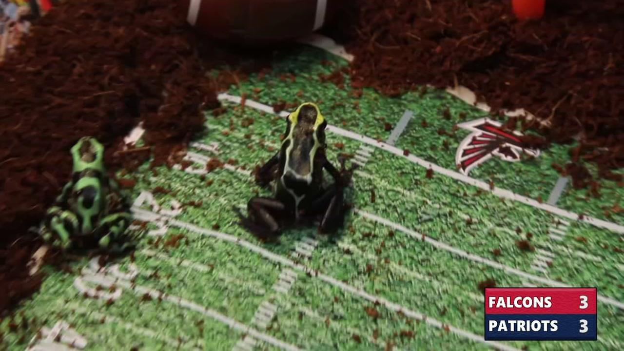 Moody Gardens poison dart frogs predict Super Bowl LI
