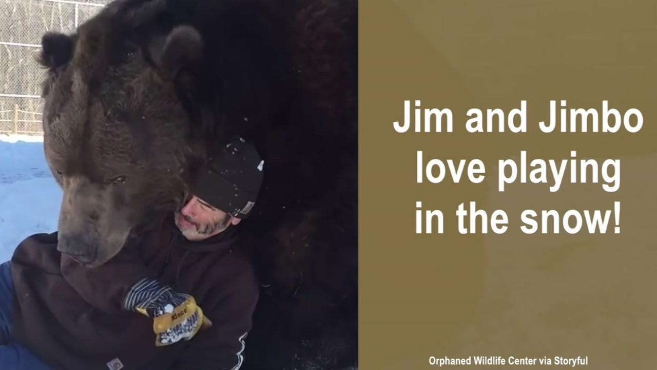 Man plays with 1,500 pound Kodiak bear