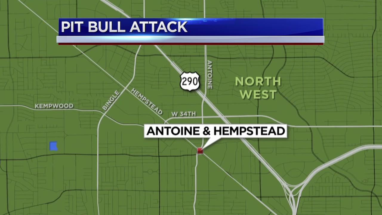 Elderly woman attacked by pit bulls at senior living facility