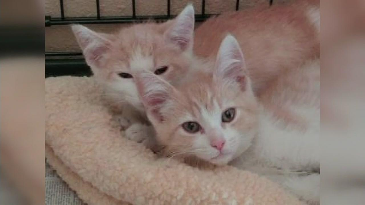 Shelter cat siblings reunited by owners romance
