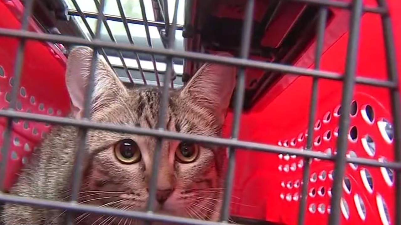 Identification mixup leads to woman taking wrong cat