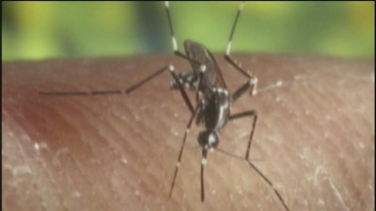 Mosquito disease comes to Houston area