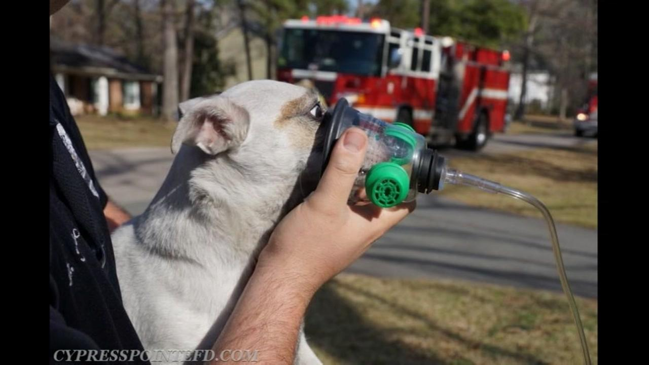 Firefighters treat dog with pet-sized oxygen mask