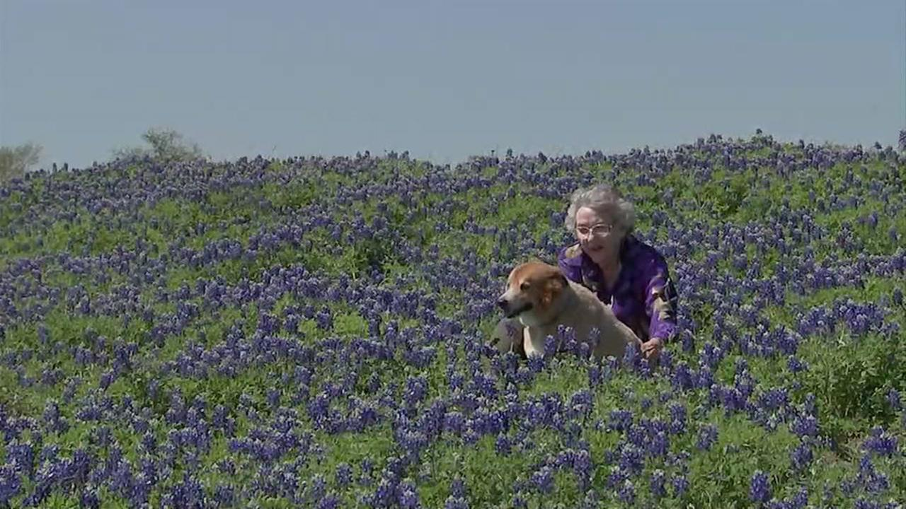 Inside the majesy of Chappel Hills bluebonnets