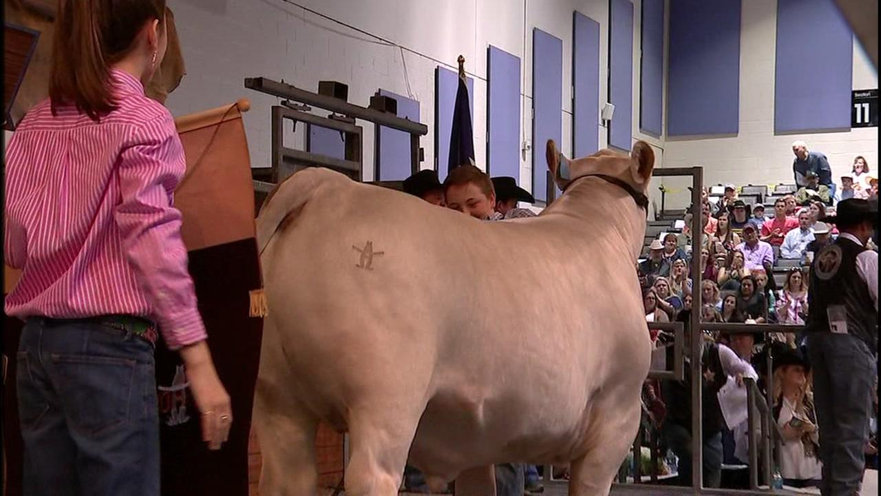 Grand Champion sells for $345,000