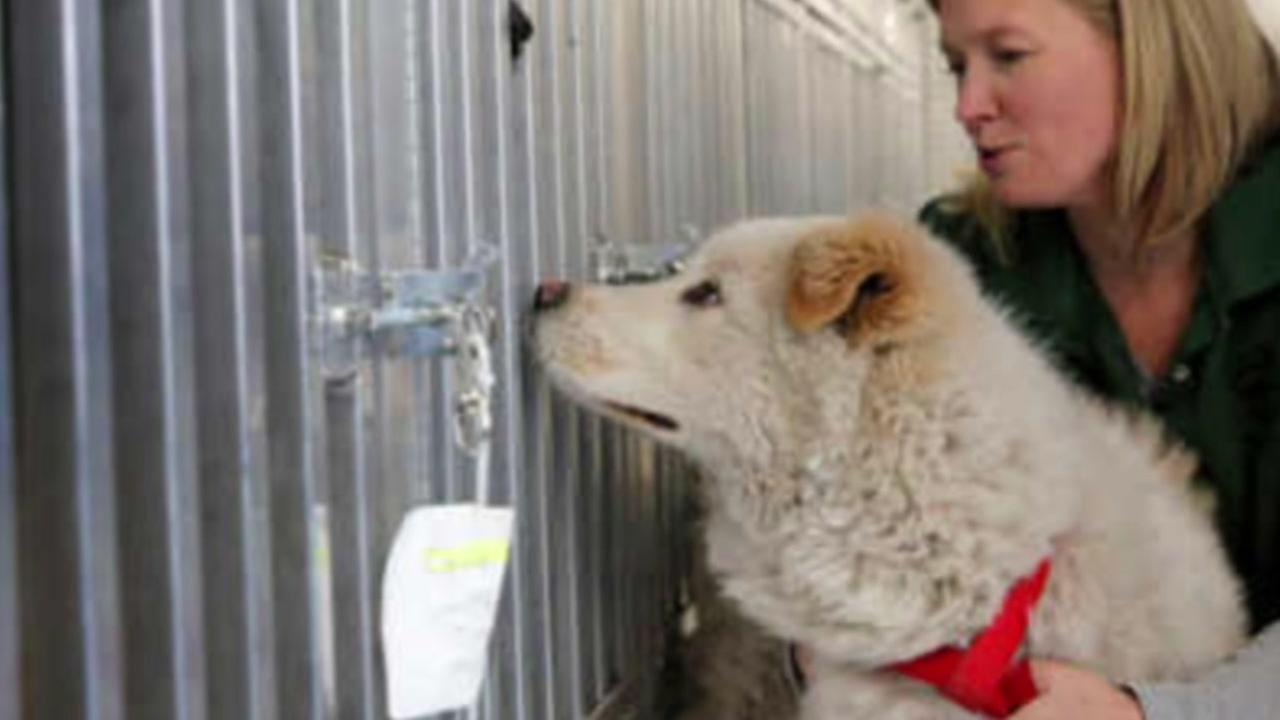 46 dogs saved from slaughter in South Korea