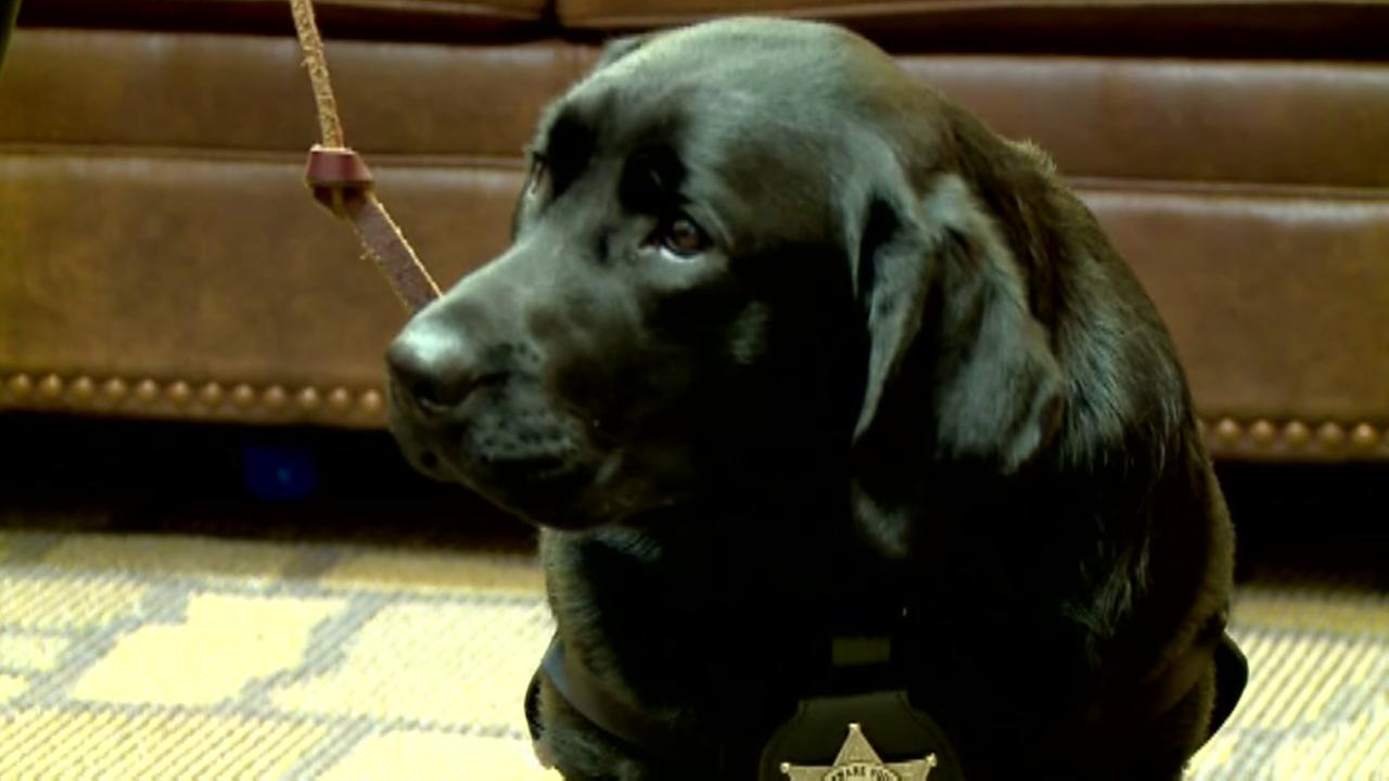 Service dog helps kids in the courtroom