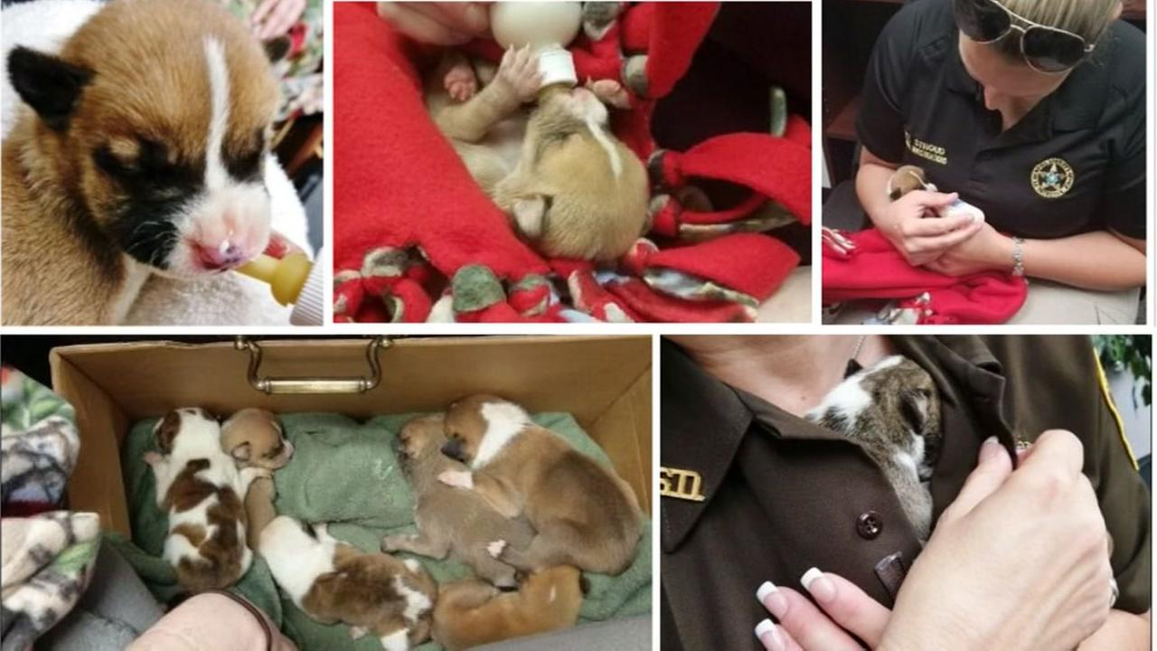 Ft. Bend Sheriff takes care of 11 abandoned puppies
