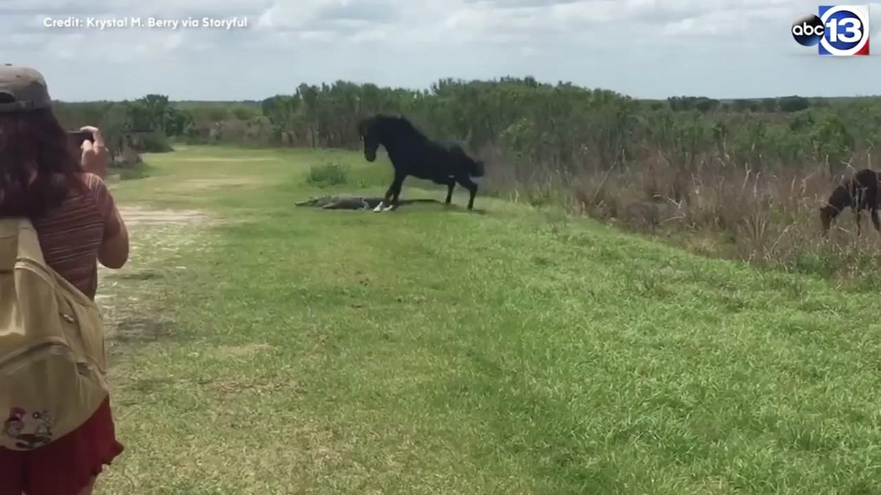 Horse takes on alligator in Florida.