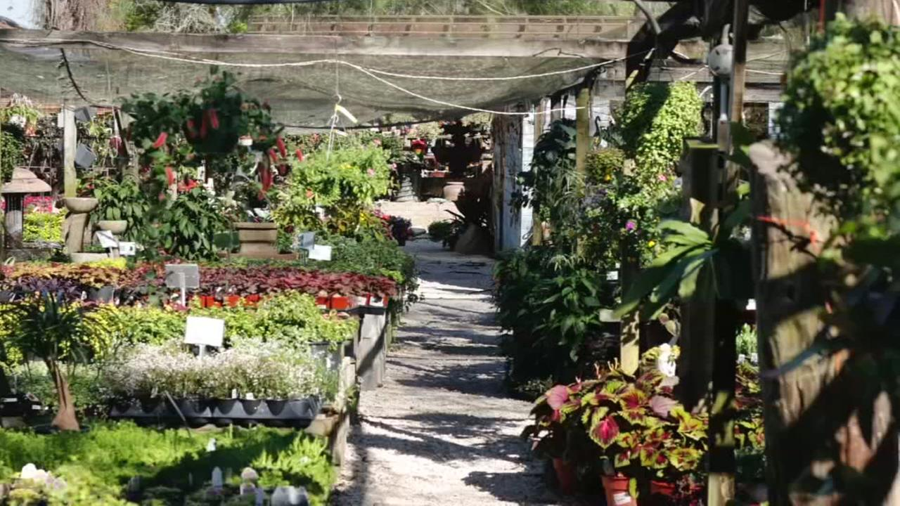 maas nursery might be the coolest backyard in se texas abc13 com