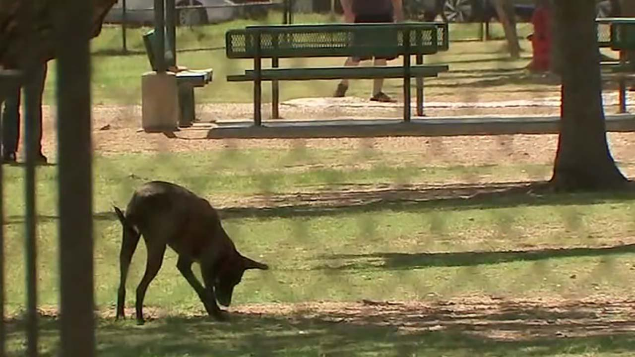 Dogs banned at new park in Bellaire