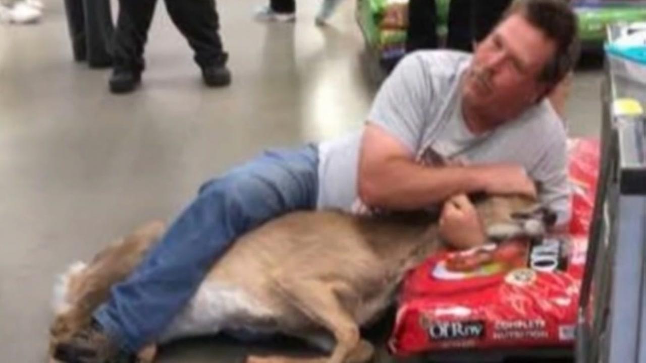 Deer wanders into Minnesota Walmart