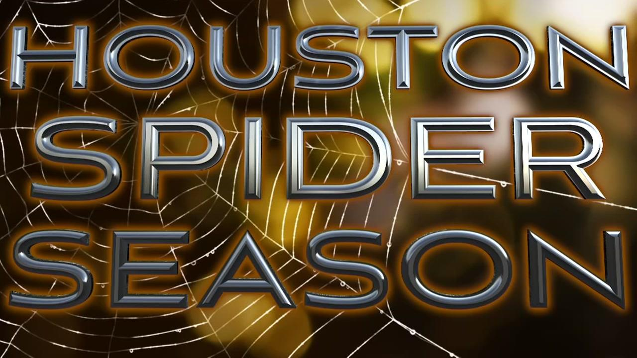A guide to Houston spiders