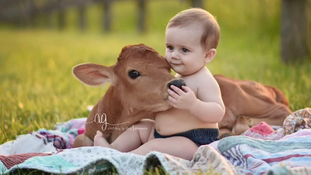 Calves join boys in adorable photo shoot