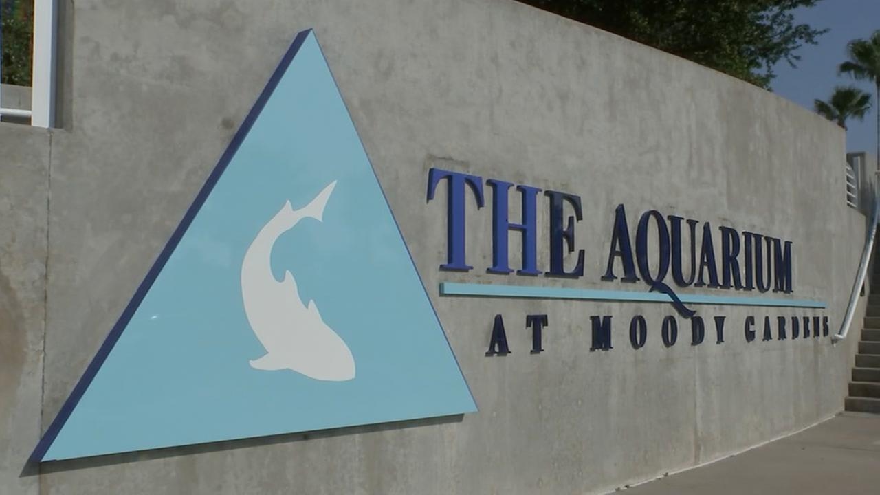 Sneak peek at Moody Gardens Aquarium Pyramid renovations | abc13.com