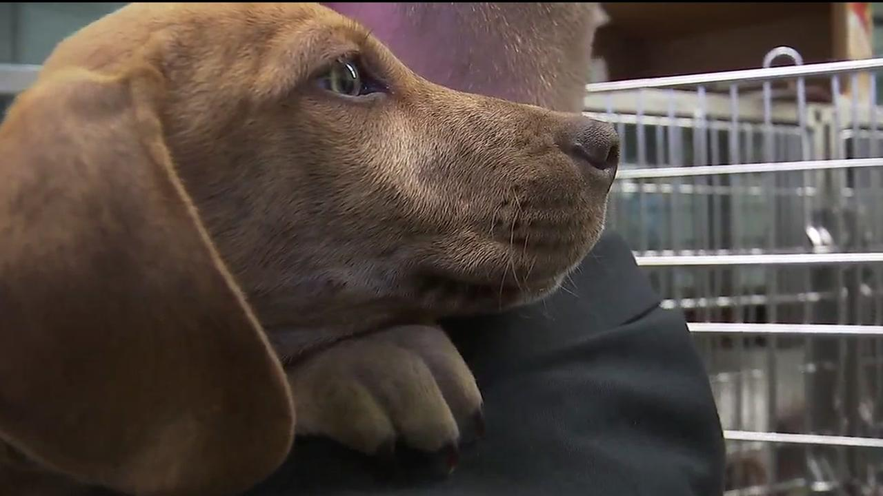 Abandoned puppy finally finds a home