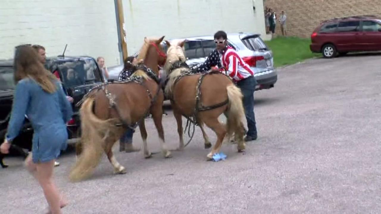Startled ponies at WI parade injure 3 people