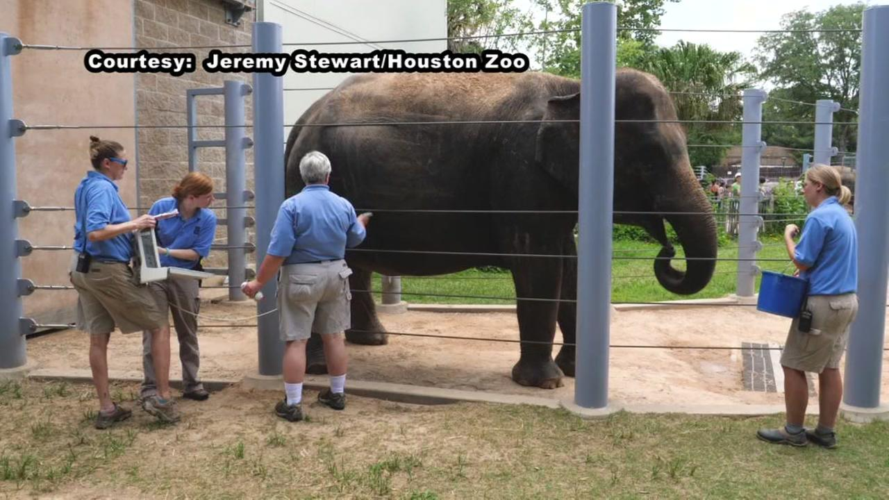Houston Zoo expecting baby elephant