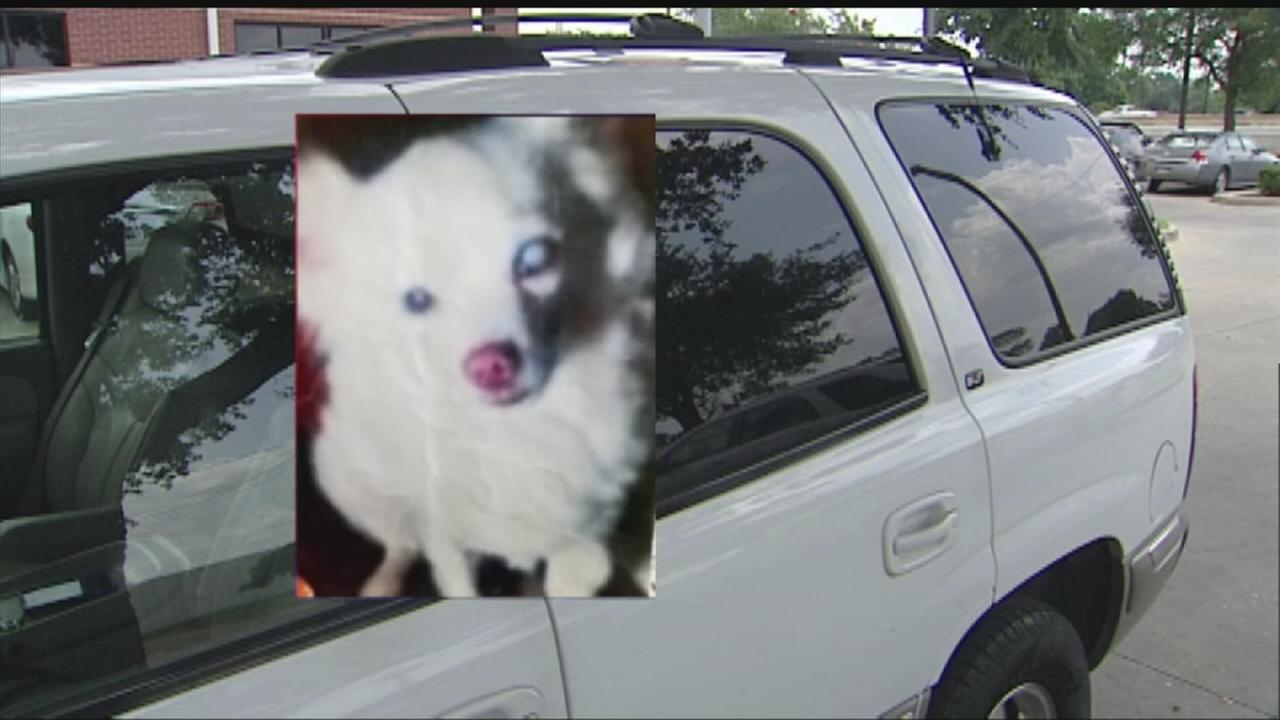 Family: Traffic stop ended with family pet dead