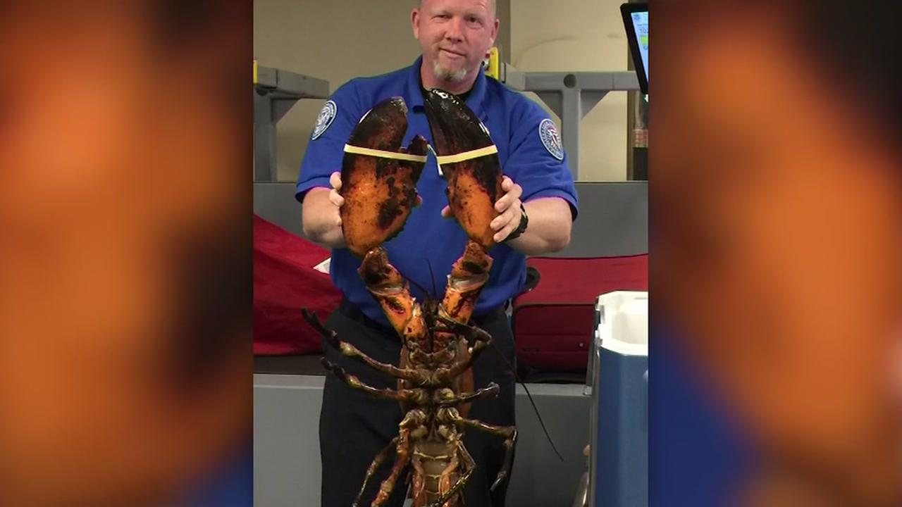 Huge lobster in checked bag at Boston airport