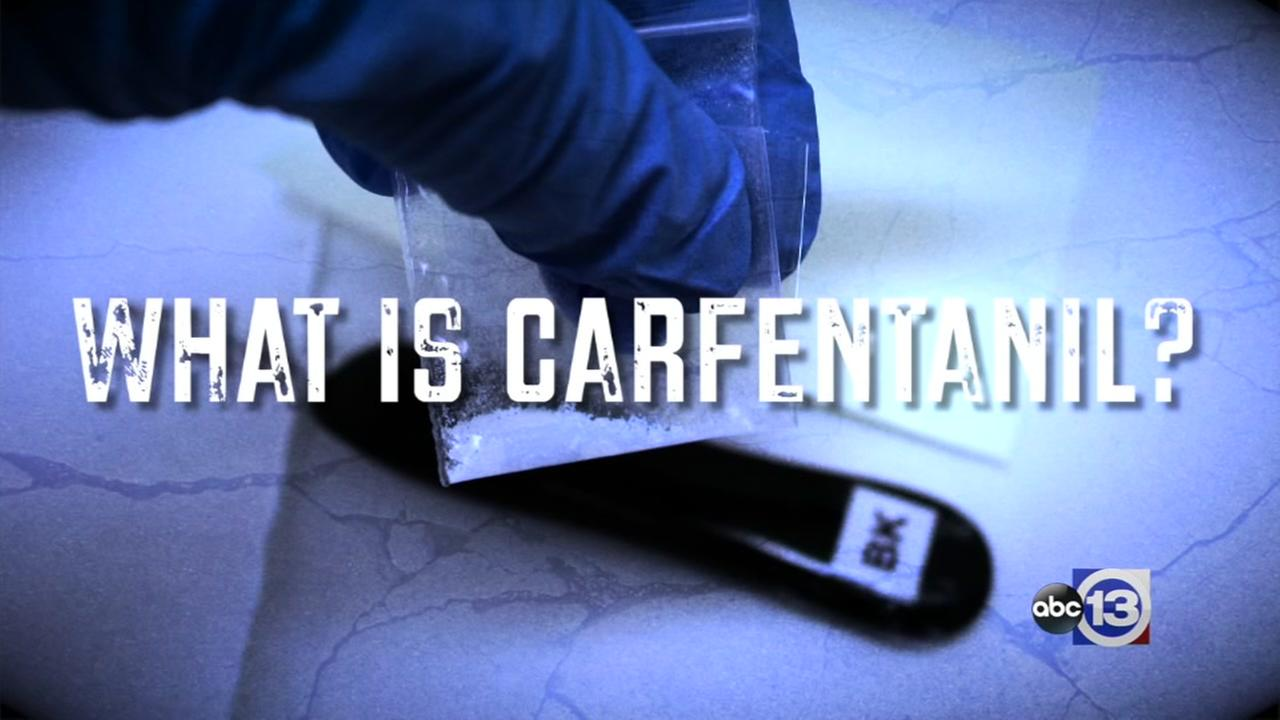 What is carfentanil?