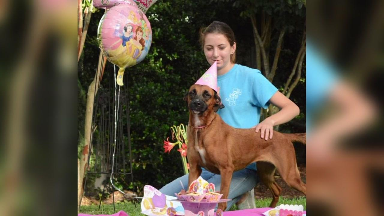 Dog gets birthday party fit for a princess