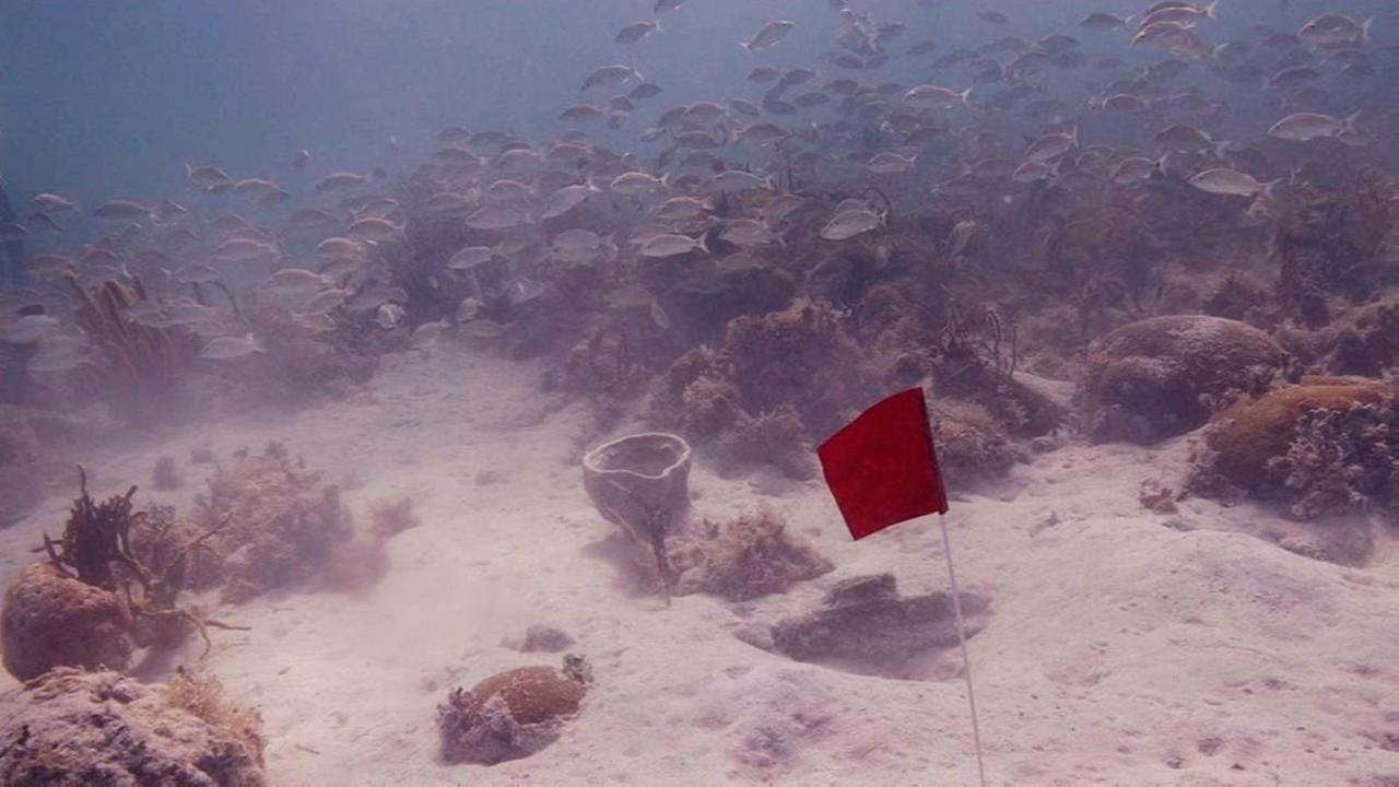 Houston man dies in Florida Keys diving incident