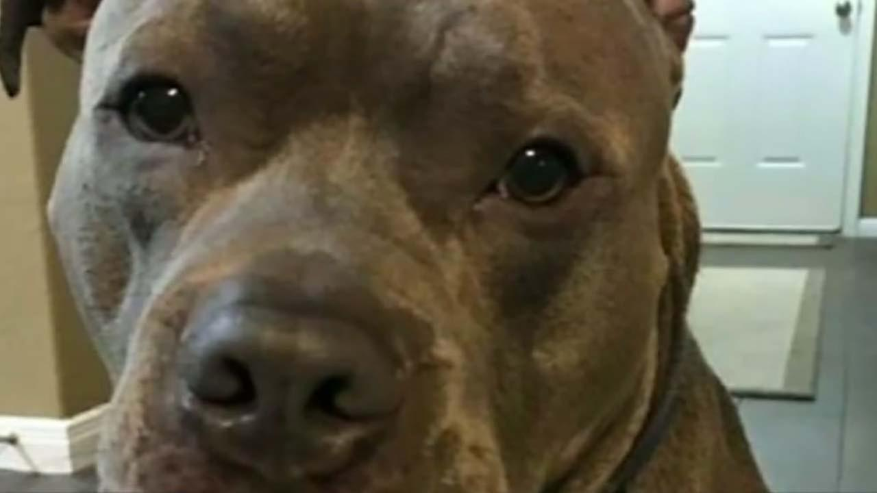 Dog owner demands to see body cam after dog shot