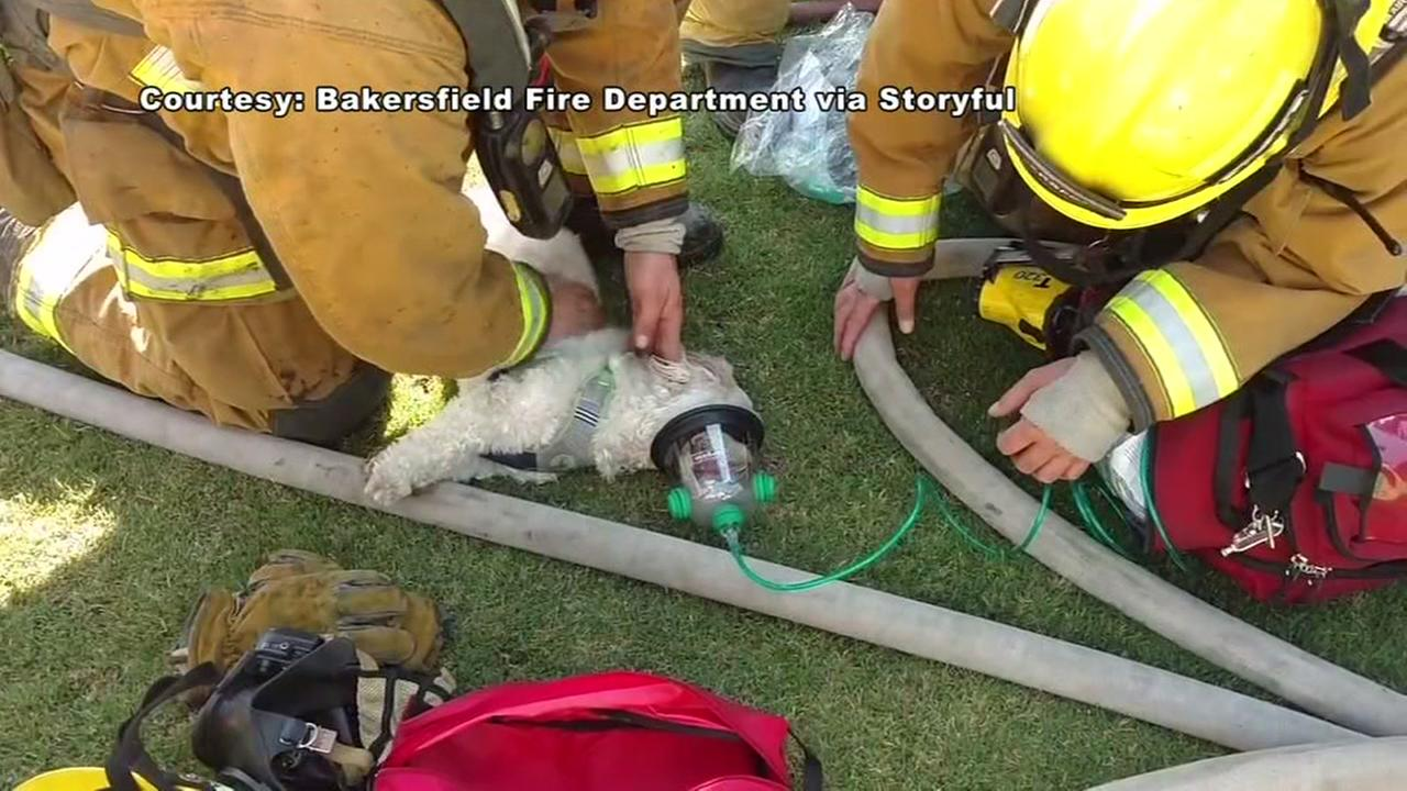 Firefighters revive dog found in smoky home