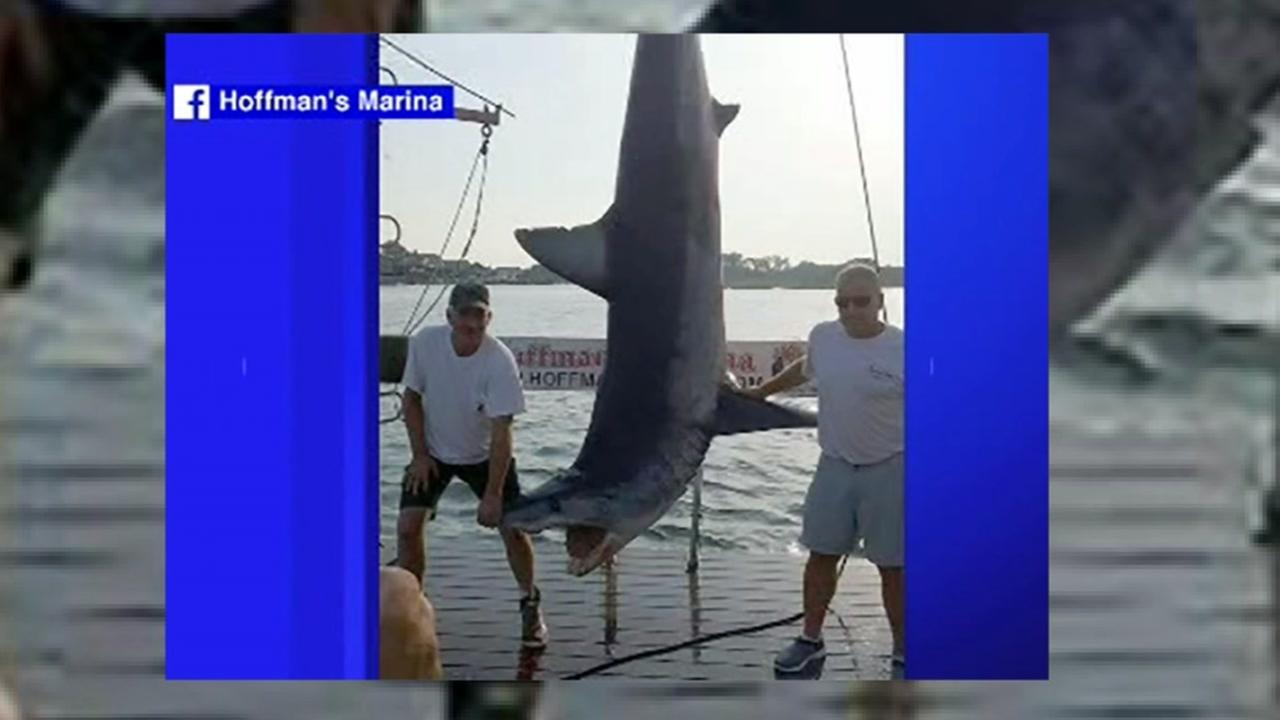 NJ fishing crew reels in record-setting mako shark.