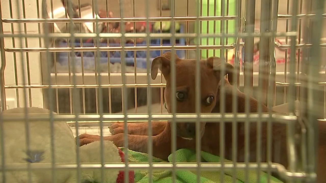 BARC dropping adoption fees after overcrowding