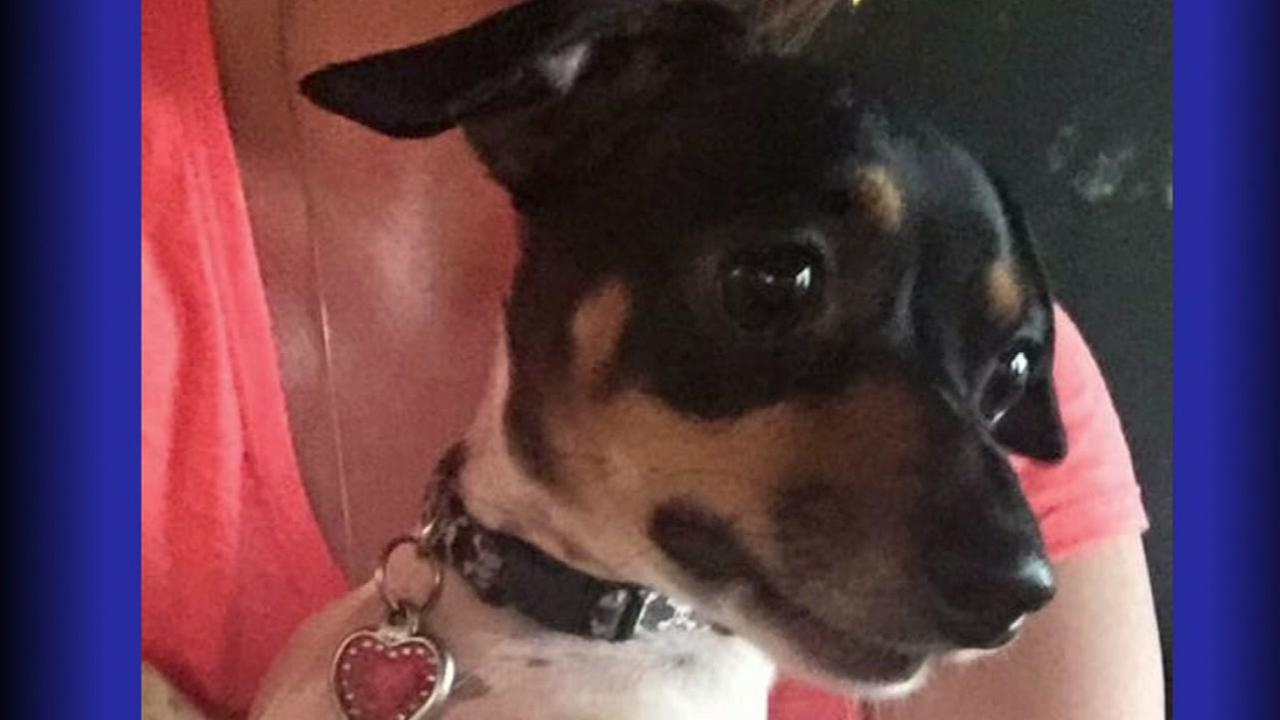 Woman searching for dog after car accident near Hobby