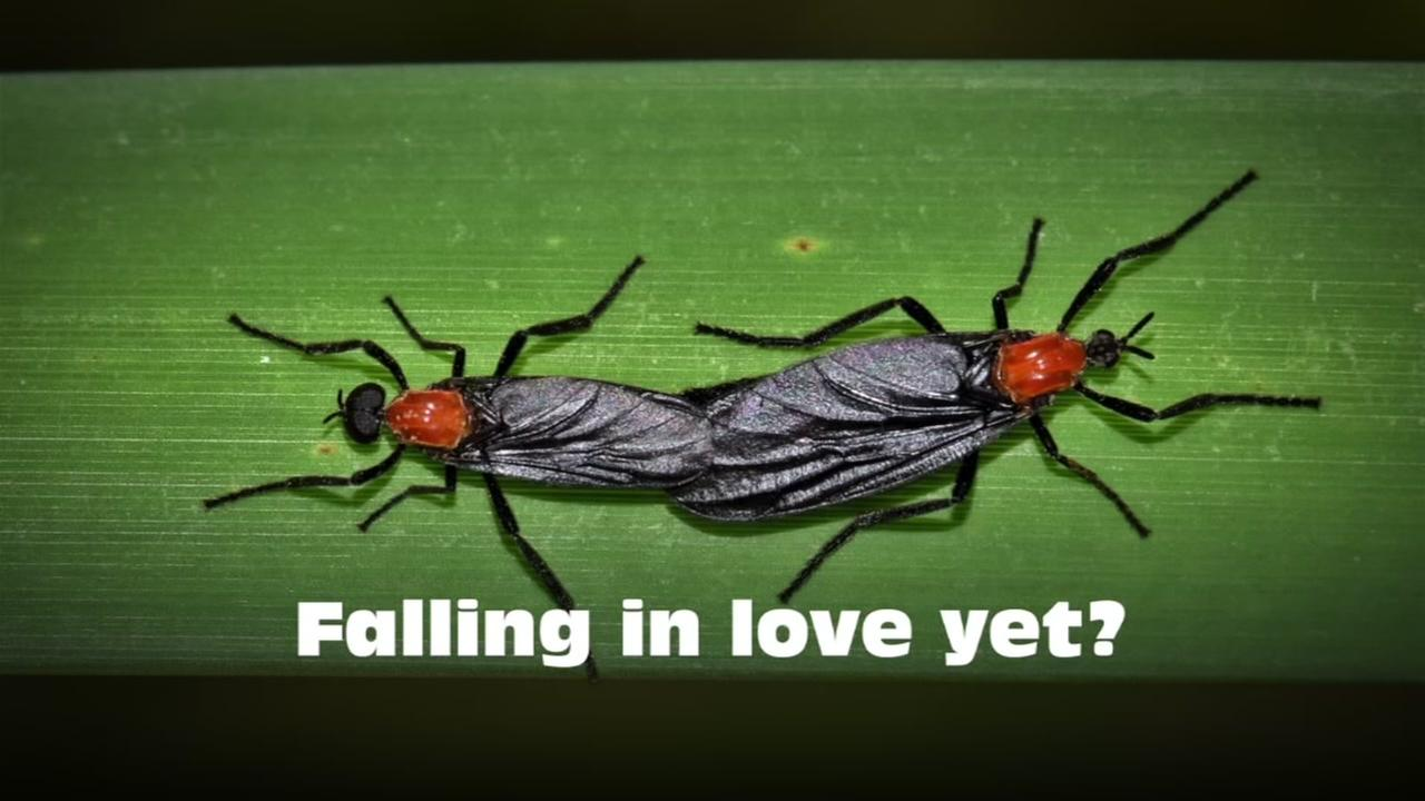 Lovebugs are in the air and wreaking havoc on your car