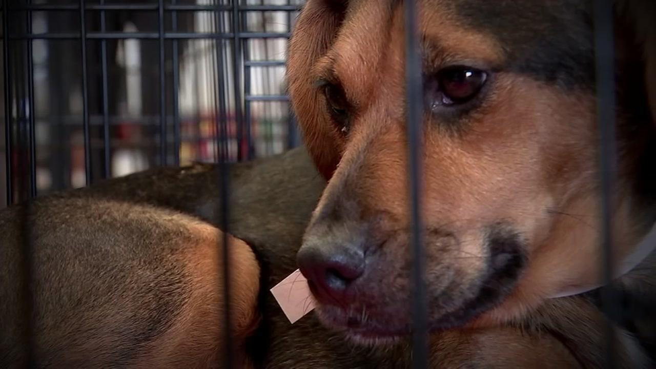 Volunteers help overloaded Dickinson animal shelter