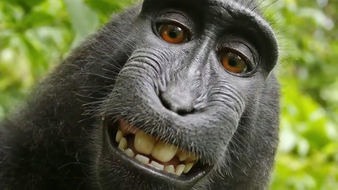 Legal fight over monkey selfie ends