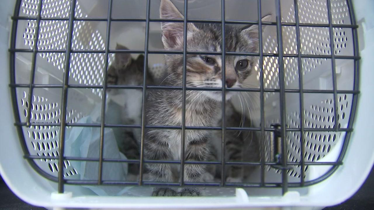 Pets evacuated after Harvey now fleeing NorCal fires