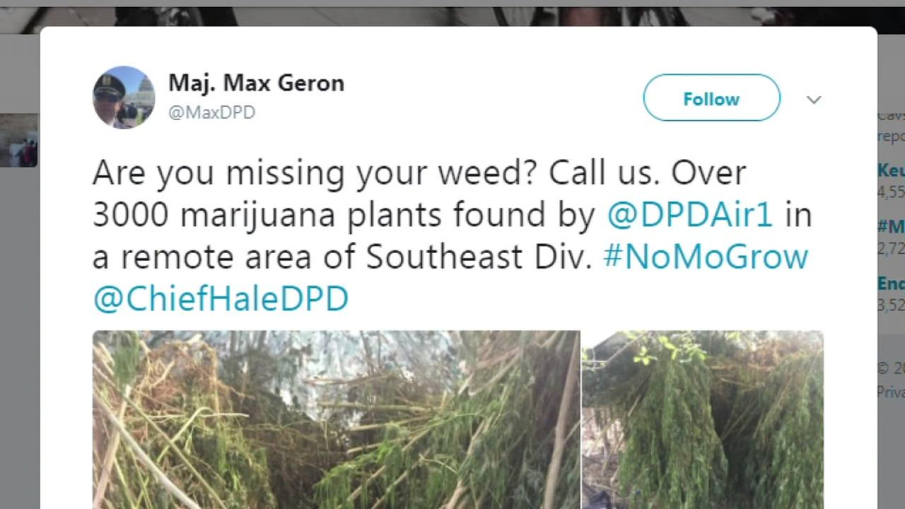 Dallas PD invites weed farmers to claim their crop