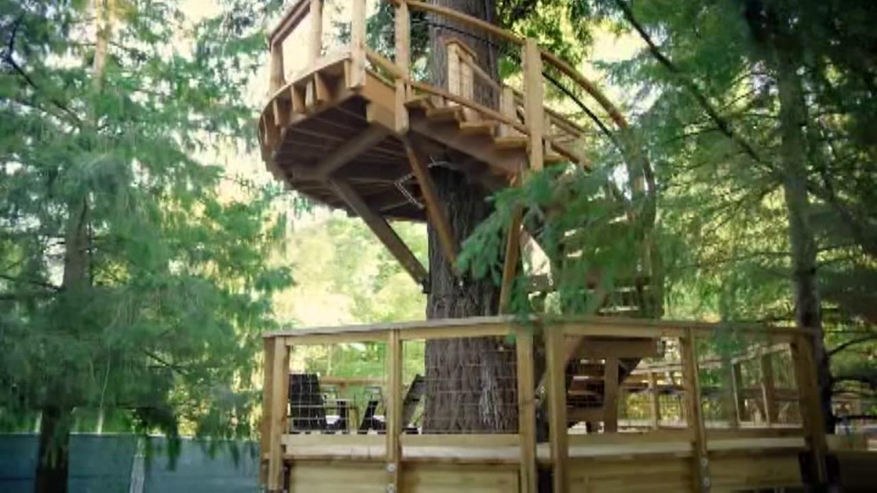 Microsoft treehouse serves as meeting room for employees