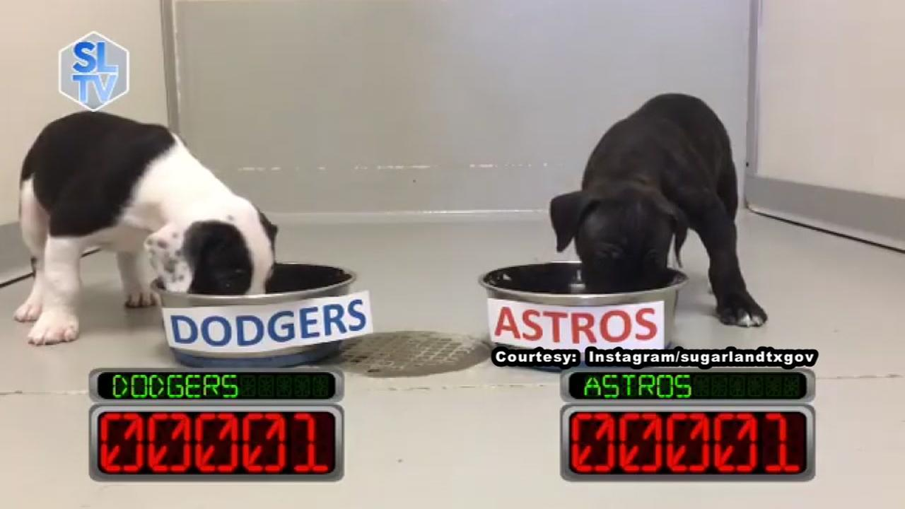 Sugar Land puppies predict an Astros World Series victory