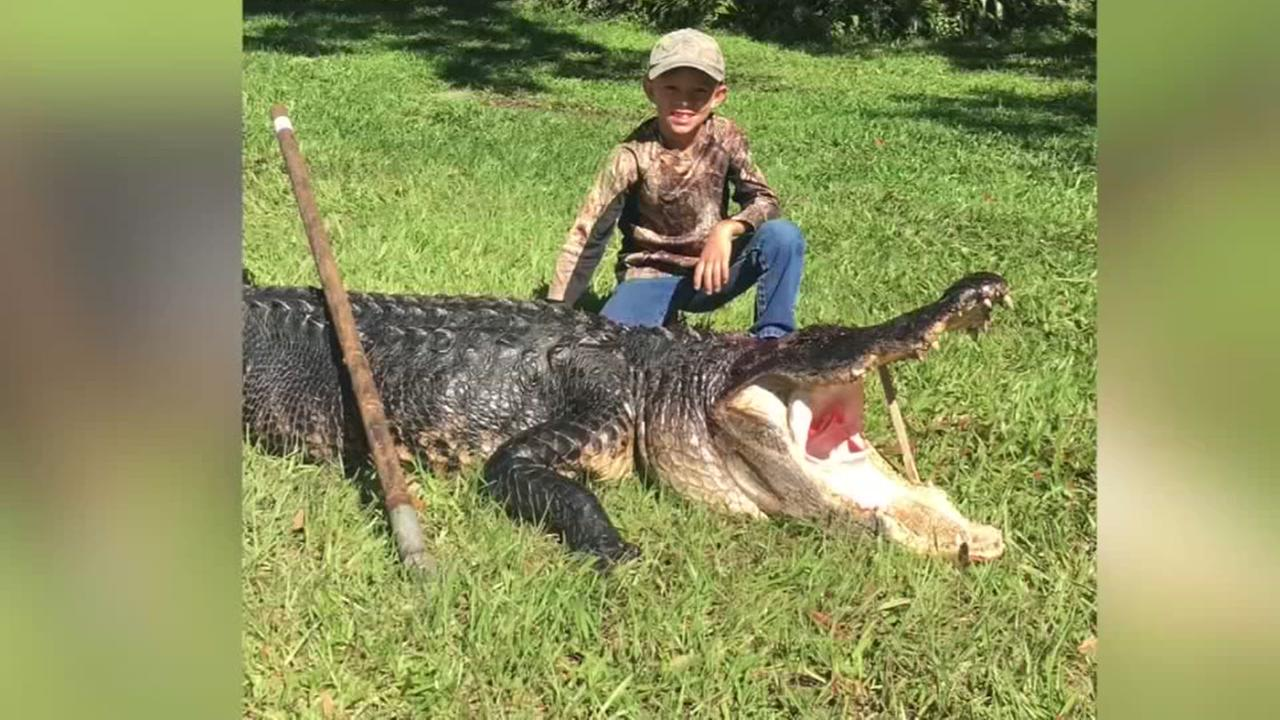 11YO catches gator