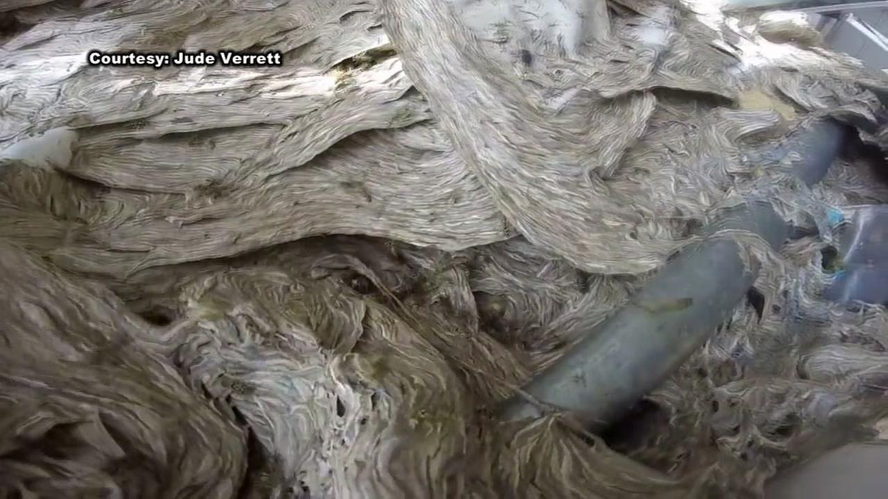 Mother of all hornets nests grows in Louisiana shed