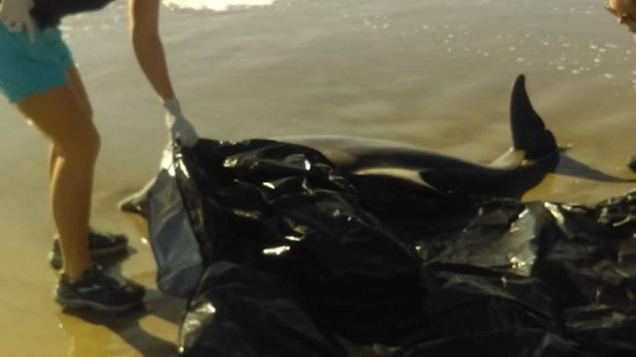 Dead dolphin found on the beach in Galveston