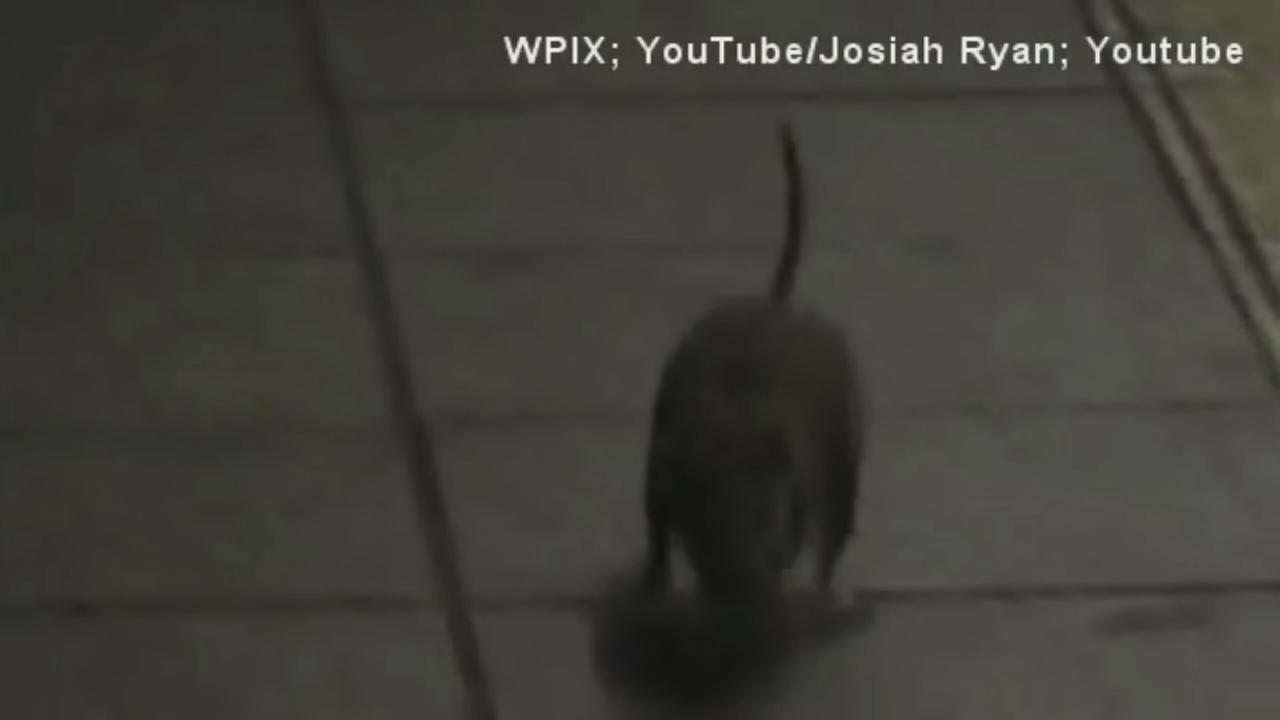 Subway rat attack caught on camera