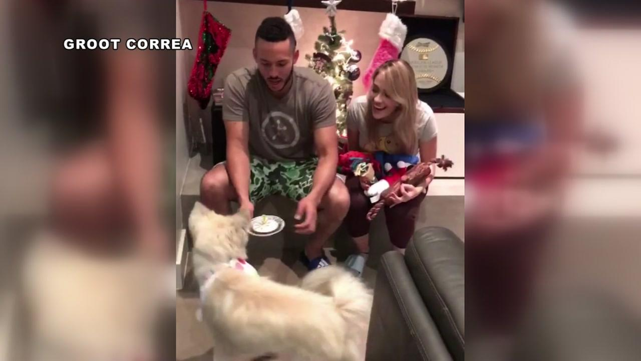 Astros Carlos Correa and fiancee celebrate their dog Groots birthday